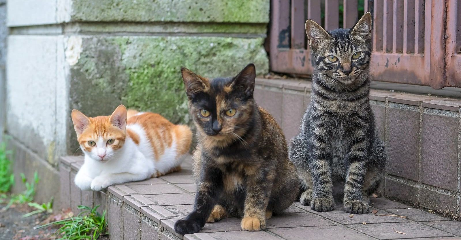 Street cats waiting for food