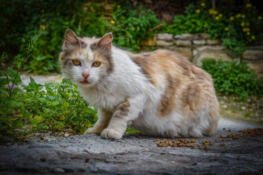 cat, stray, street